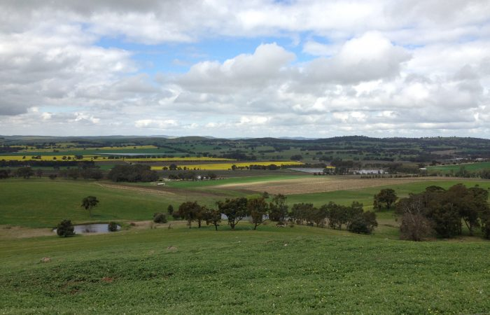 Clare Valley photo - September 2014