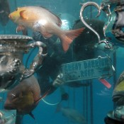 The Australian Open trophies watch on as scuba divers take to the waters of the Great Barrier Reef in Queensland; Tennis Australia
