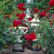 The Norman Brookes Challenge Cup (L) and Daphne Akhurst Memorial Cup at the rose gardens of Old Parliament House in Canberra; Tennis Australia